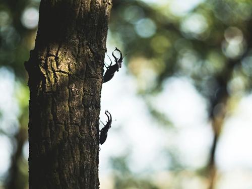 クワガタ 種類 見つけ方 木 北海道 沖縄