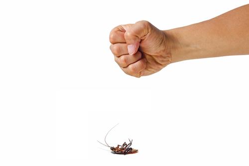 カブトムシ クワガタ ゴキブリ 見分け方