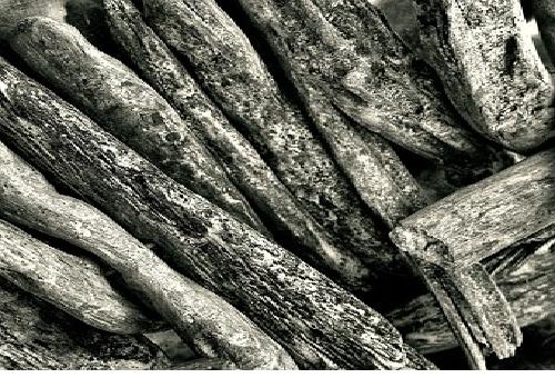 クワガタ 朽木 産卵 幼虫