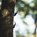 クワガタがいる木の種類と見つけ方・北海道と沖縄でのその違い