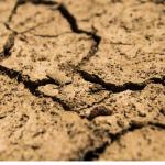 クワガタの冬眠時期と温度・乾燥について