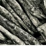 クワガタの産卵には朽木が必要って本当?クワガタの幼虫はどうやって大きくなるの?