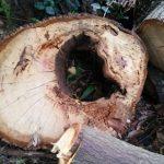 ニジイロクワガタが産卵に木を利用する意味は?